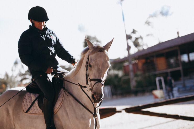 paardentuig
